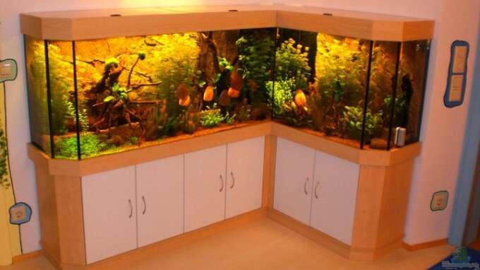 seite von daniel o aquarium einrichtungsbeispiele. Black Bedroom Furniture Sets. Home Design Ideas