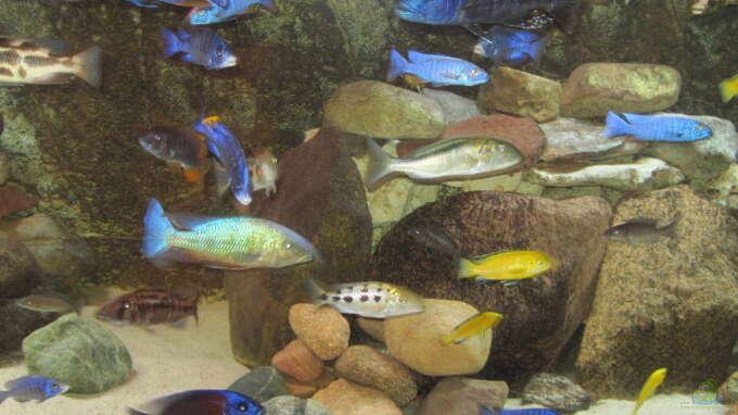 Aquarium Hauptansicht von Mannes Badewanne