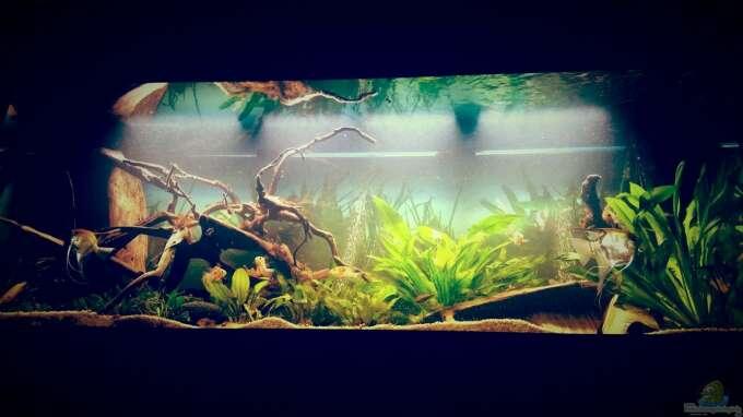 """Aquarium Hauptansicht von Amazonas """"Regenzeit"""""""