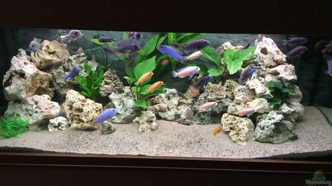 Aquarium Hauptansicht von Meins