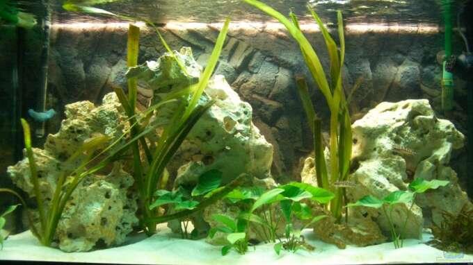 Aquarium Hauptansicht von Neolamprologus buescheri Artenbecken