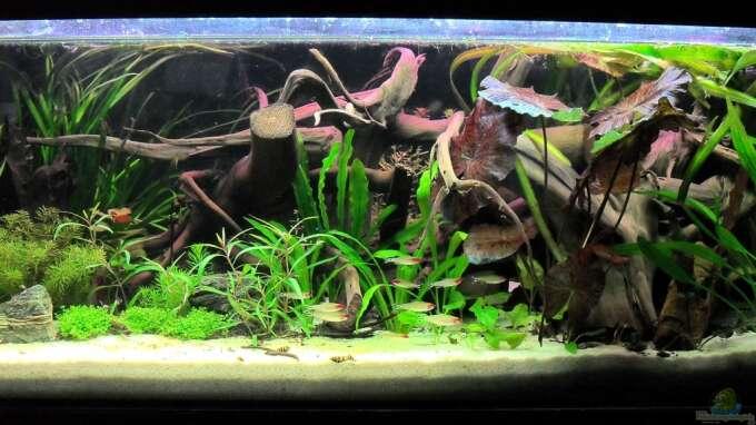 Seite von jan s aquarium einrichtungsbeispiele for Zierfische hannover