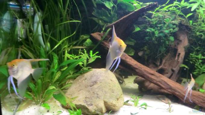 Aquarium von morten becken 19680 for Zierfische hannover