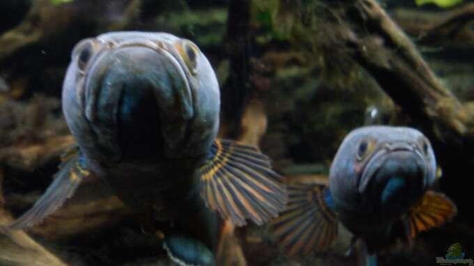Aquarium Hauptansicht von NUR NOCH  BEISPIEL