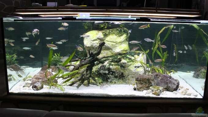 Aquarium Hauptansicht von Mein Wohnzimmersee