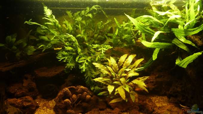 Aquarium Hauptansicht von Small creek