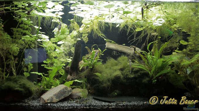 aquarium von ferrika 22065 rhinogobius duospilus. Black Bedroom Furniture Sets. Home Design Ideas