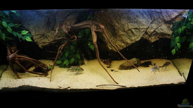 Aquarium von amazonasfelix 22124 wohnzimmer orinoco - Aquarium wohnzimmer ...