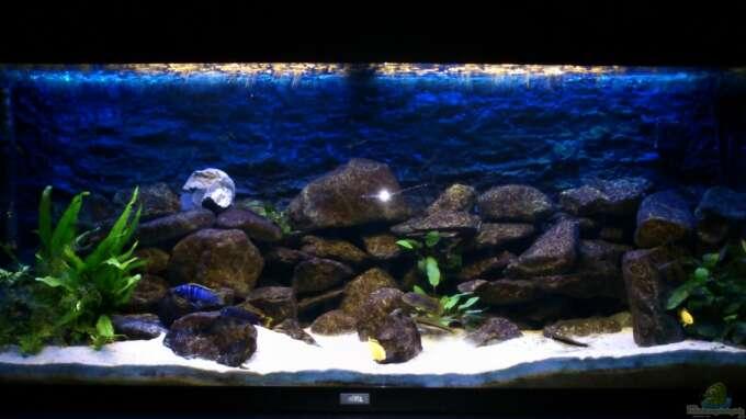 Aquarium von Stulli (22260): Mein erstes Malawibecken