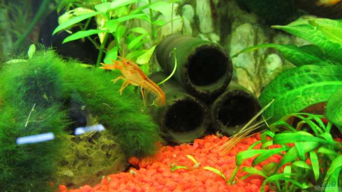 aquarium filter richtig reinigen
