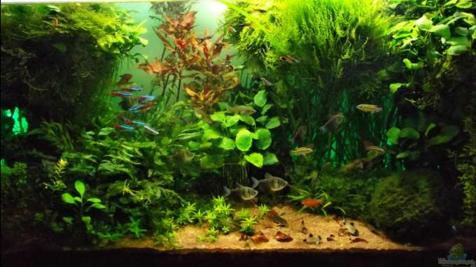 Aquarium Hauptansicht von The green Dream