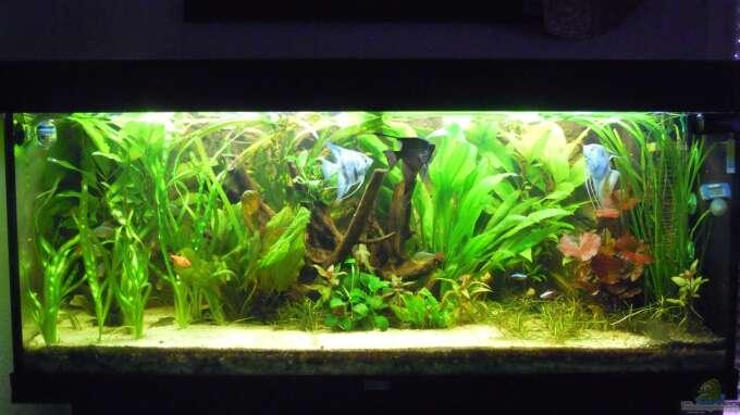 Aquarium Hauptansicht von Skalarbecken