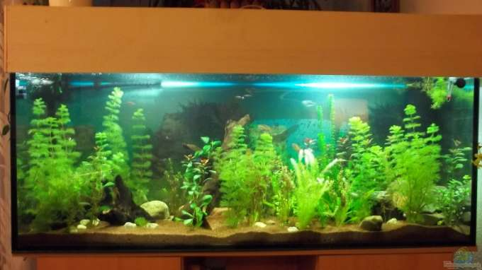 aquarium von benjamin23 23560 gesellschaftsbecken. Black Bedroom Furniture Sets. Home Design Ideas
