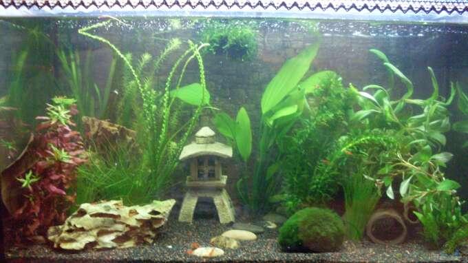 Seite von brausefisch aquarium einrichtungsbeispiele for Zierfische hannover
