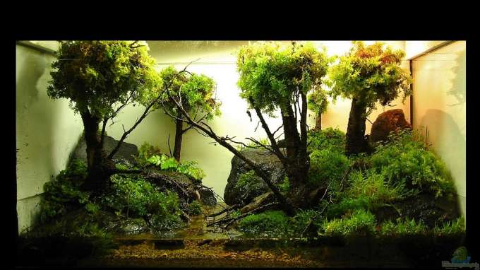 Aquascaping&Landscaping: Mossy Forest Paludarium
