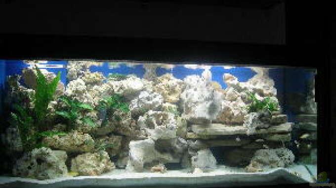 Aquarium von helmut loehr becken 2524 for Aquarium einrichtungsideen