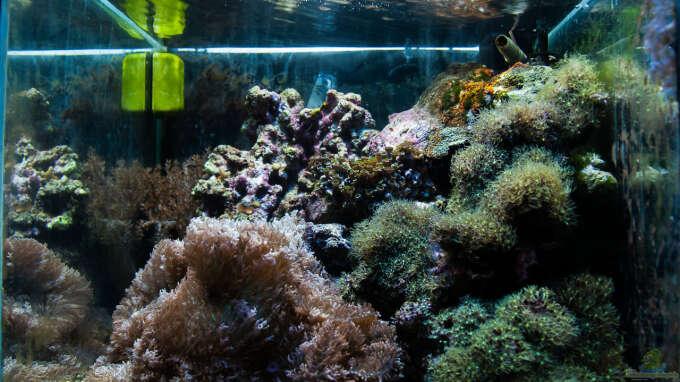 Aquarium Hauptansicht von MW Würfel WZ