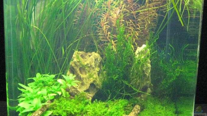 Wettbewerb bepflanzte aquarien artikel 1515 for Zierfische hannover