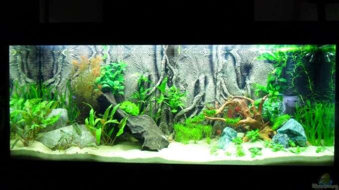 Aquarium von morro 25748 asiawood for Aquarium 120x40x50