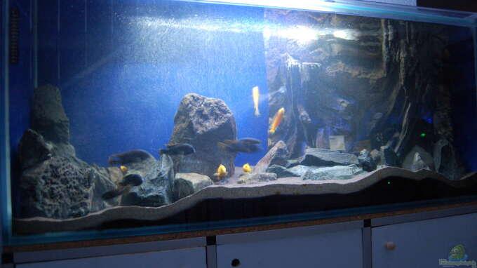 Aquarium Hauptansicht von Blauer Felsen