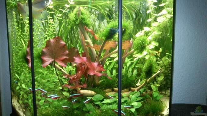 aquarium von martini 26556 8 eck habitat. Black Bedroom Furniture Sets. Home Design Ideas