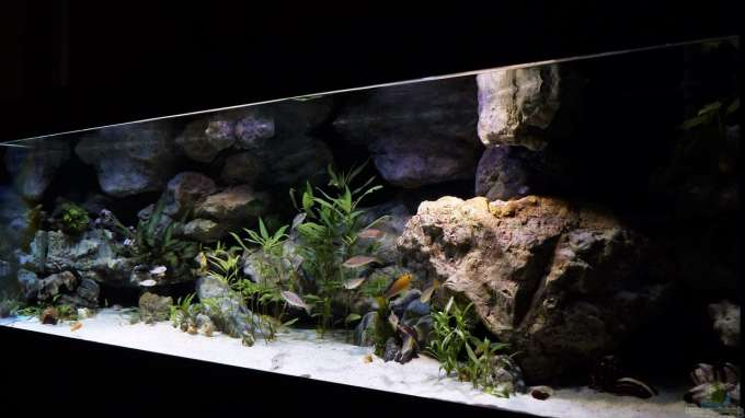 Aquarium Hauptansicht von meine Ruheoase