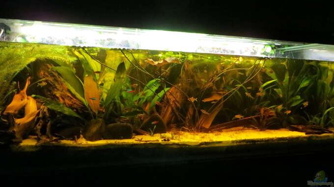 Aquarium Hauptansicht von Amazonas Nebenfluss