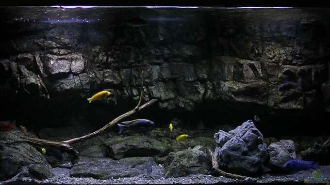 Aquarium Hauptansicht von 575 Liter Malawibecken