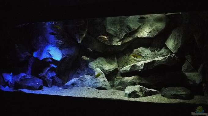 aquarium von sven becken 29067. Black Bedroom Furniture Sets. Home Design Ideas