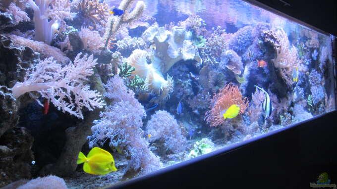 aquarium von andreas l becken 29195. Black Bedroom Furniture Sets. Home Design Ideas