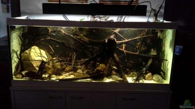 aquarium von markaroni 450 l wurzelbiotop. Black Bedroom Furniture Sets. Home Design Ideas