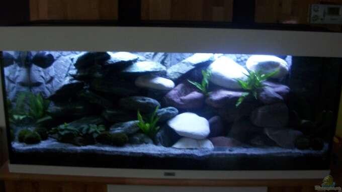 aquarium von malawi anf nger malawibecken. Black Bedroom Furniture Sets. Home Design Ideas
