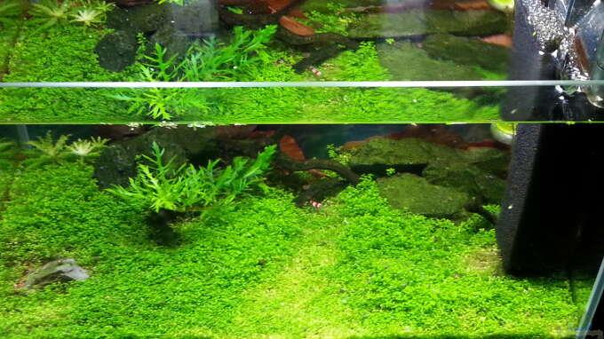 Aquarium Hauptansicht von Becken 31169