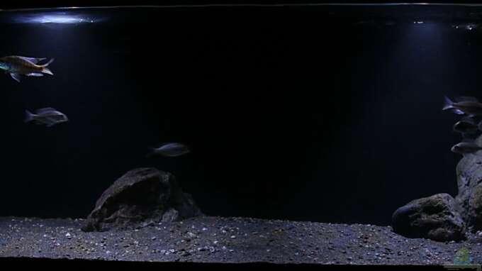 Aquarium Hauptansicht von Lethrinops Buddelkiste (Artenbecken)
