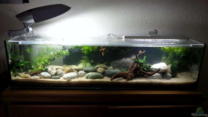 Aquarium Hauptansicht von Grundelbecken