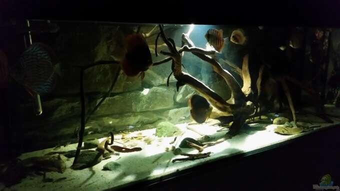 Aquarium Hauptansicht von Wurzelbiotop