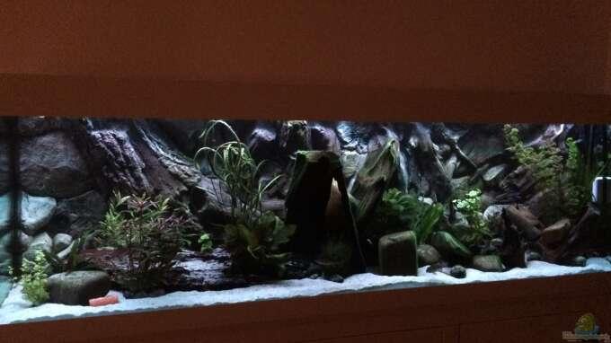 Aquarium Hauptansicht von Geophagus Proximus