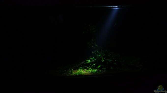 Aquarium Hauptansicht von Easy Scaping (nur noch Beispiel)