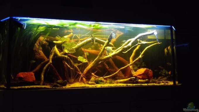 Aquarium Hauptansicht von Oldschool Panorama