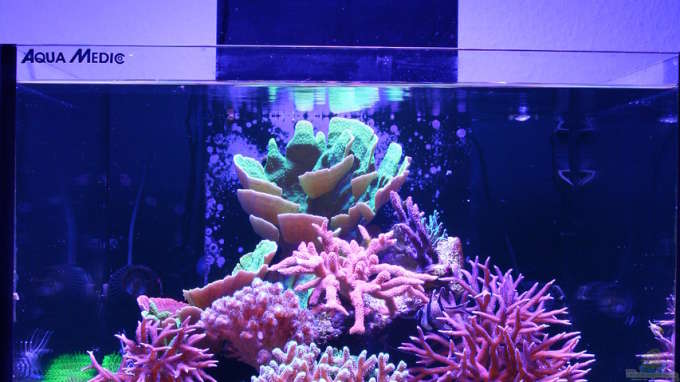 Aquarium Hauptansicht von Jojos Cubicus