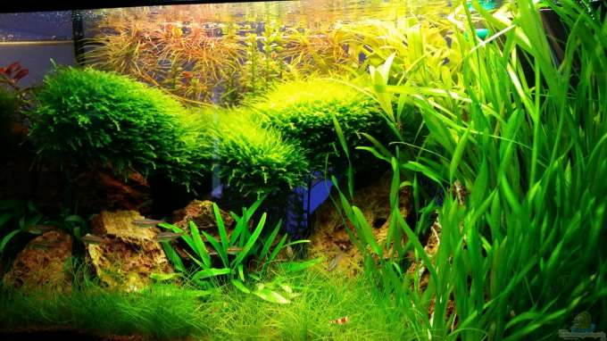 Aquarium Hauptansicht von little green hell