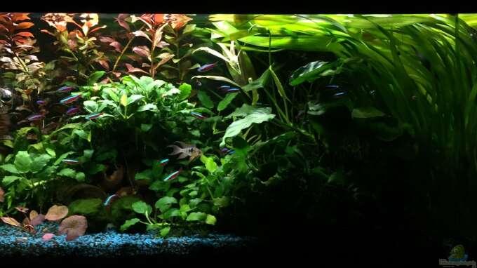 Aquarium Hauptansicht von 125l-Gesellschaftsbecken