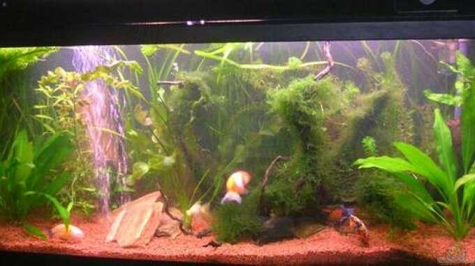 Aquarium von miriam berkenbrock becken 3186 for Aquarium 120x40x50