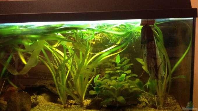 Aquarium Hauptansicht von Becken 31913