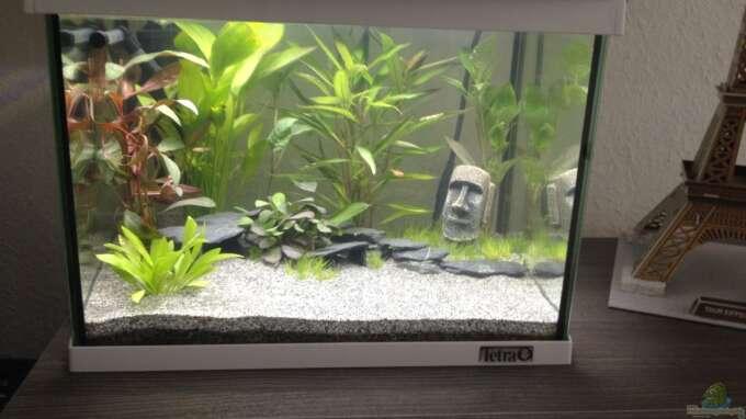 Aquarium Hauptansicht von Nano Becken