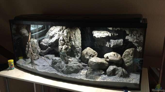 Aquarium Hauptansicht von Castle of Malawi