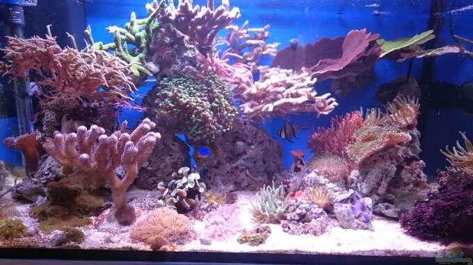 Aquarium Hauptansicht von 140 Liter Meerwasseraquarium