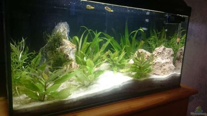 Aquarium Hauptansicht von Perlhuhntümpel