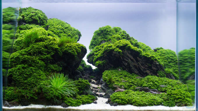 Aquarium Hauptansicht von Straight Edge
