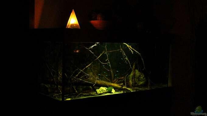 Aquarium Hauptansicht von Ein Stück Südamerika